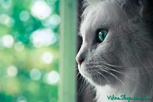 Коты и металлопластиковые окна в Харькове (Видео)
